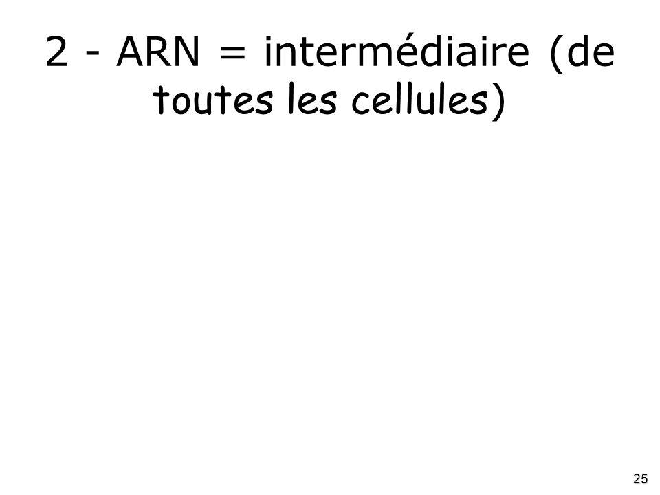 2 - ARN = intermédiaire (de toutes les cellules)