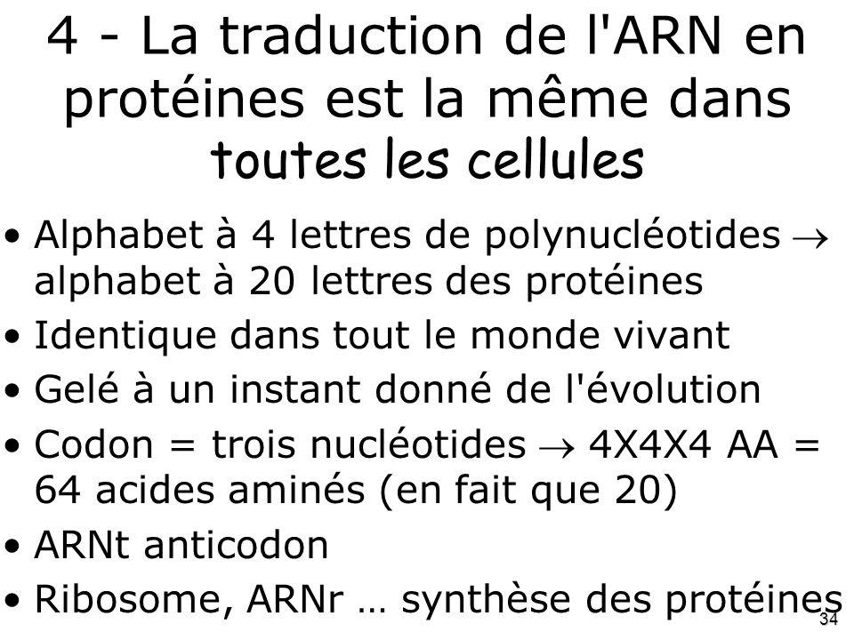 4 - La traduction de l ARN en protéines est la même dans toutes les cellules