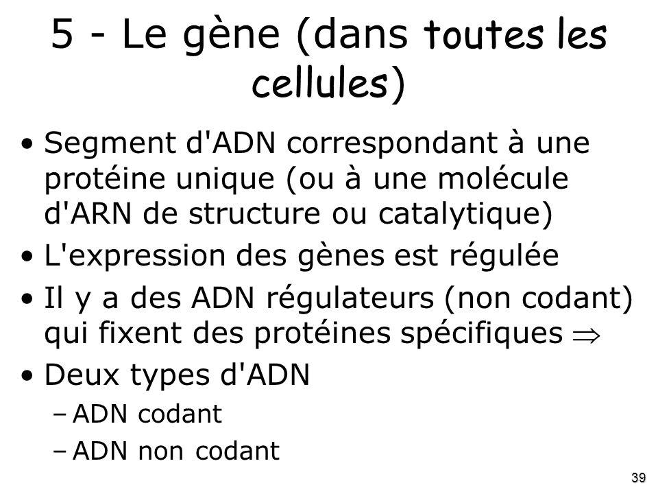 5 - Le gène (dans toutes les cellules)