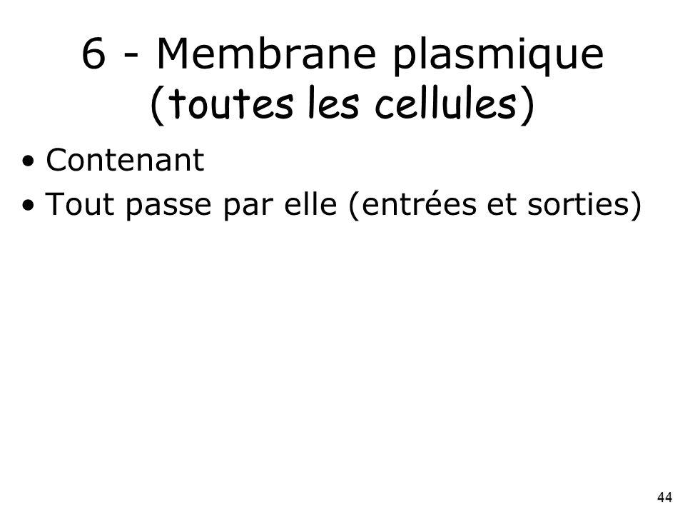6 - Membrane plasmique (toutes les cellules)
