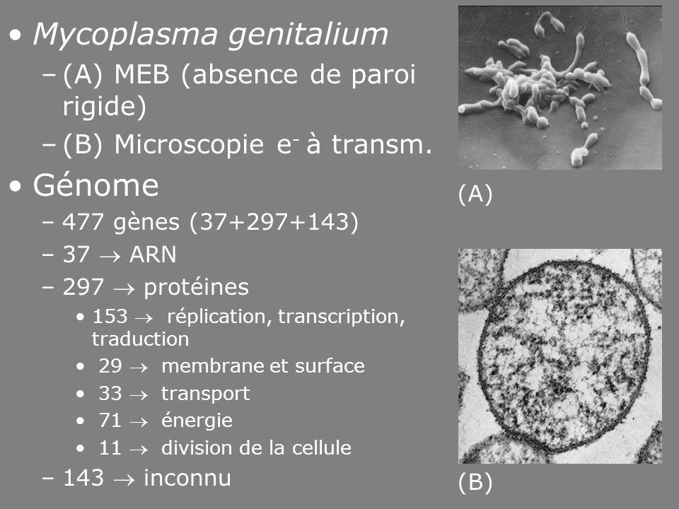 Fig 1-14 Mycoplasma genitalium Génome