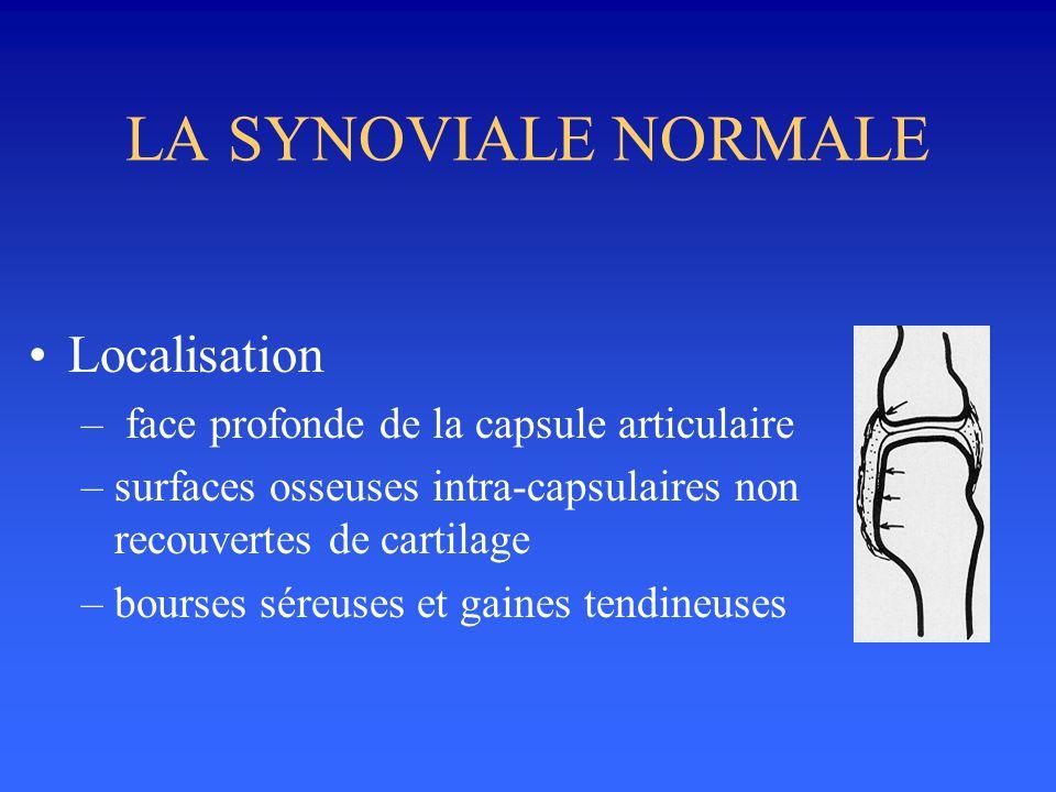 LA SYNOVIALE NORMALE Localisation