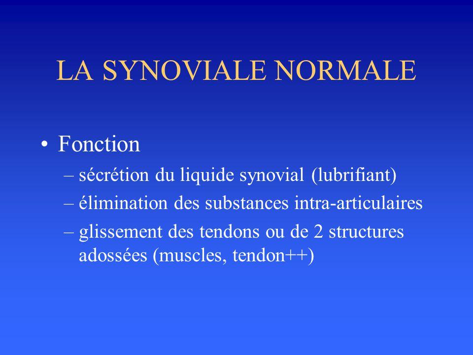 LA SYNOVIALE NORMALE Fonction