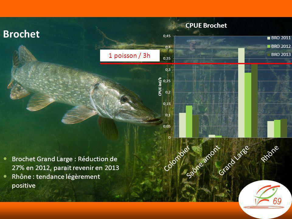Brochet 1 poisson / 3h. Brochet Grand Large : Réduction de 27% en 2012, parait revenir en 2013.