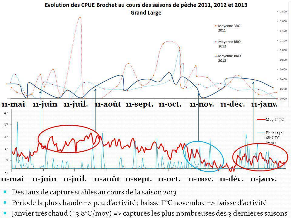 Des taux de capture stables au cours de la saison 2013