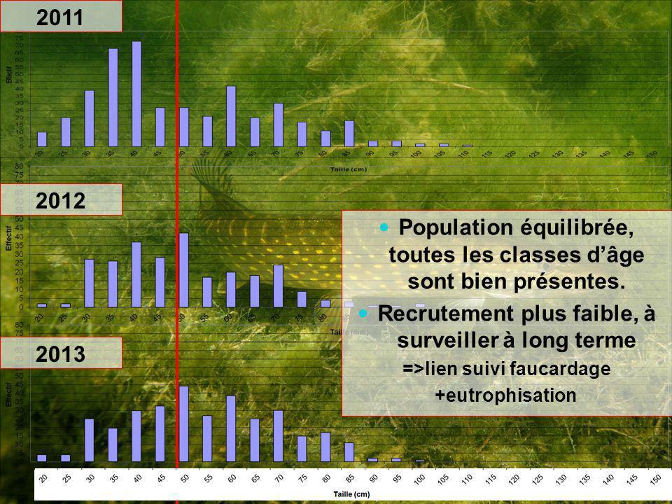 Population équilibrée, toutes les classes d'âge sont bien présentes.