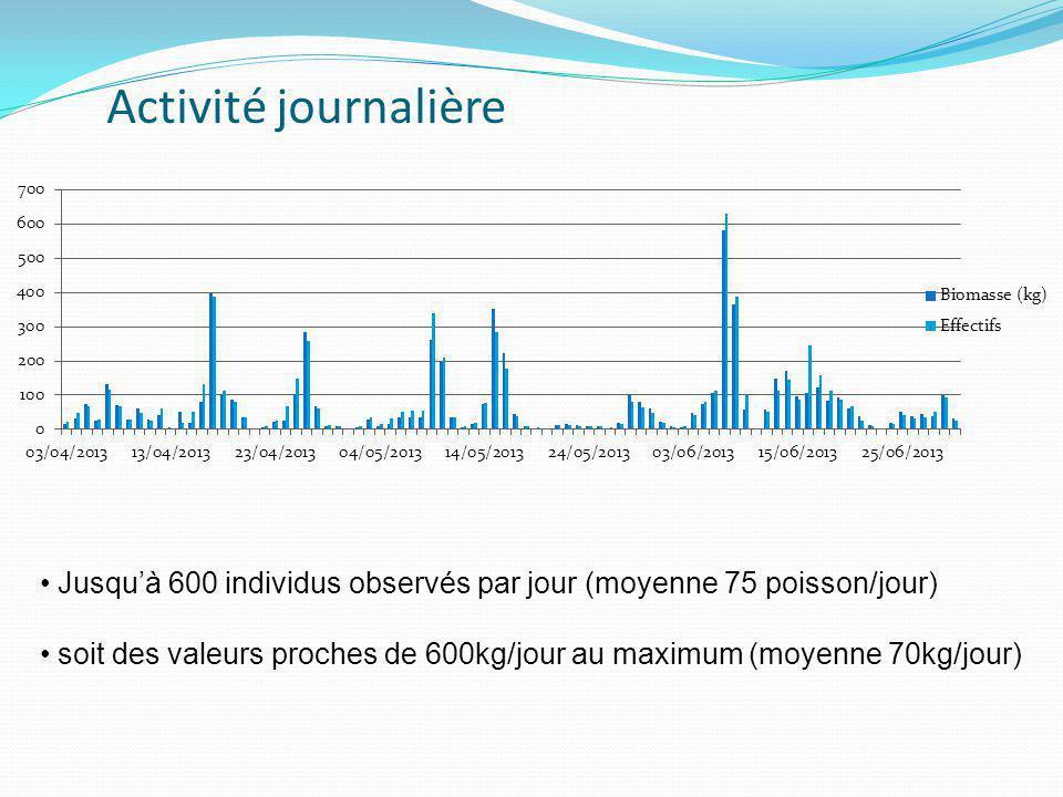 Activité journalière Jusqu'à 600 individus observés par jour (moyenne 75 poisson/jour)