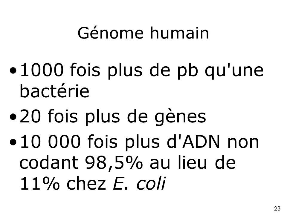 1000 fois plus de pb qu une bactérie 20 fois plus de gènes