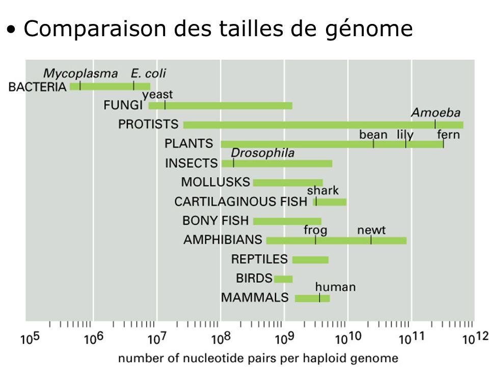 Comparaison des tailles de génome