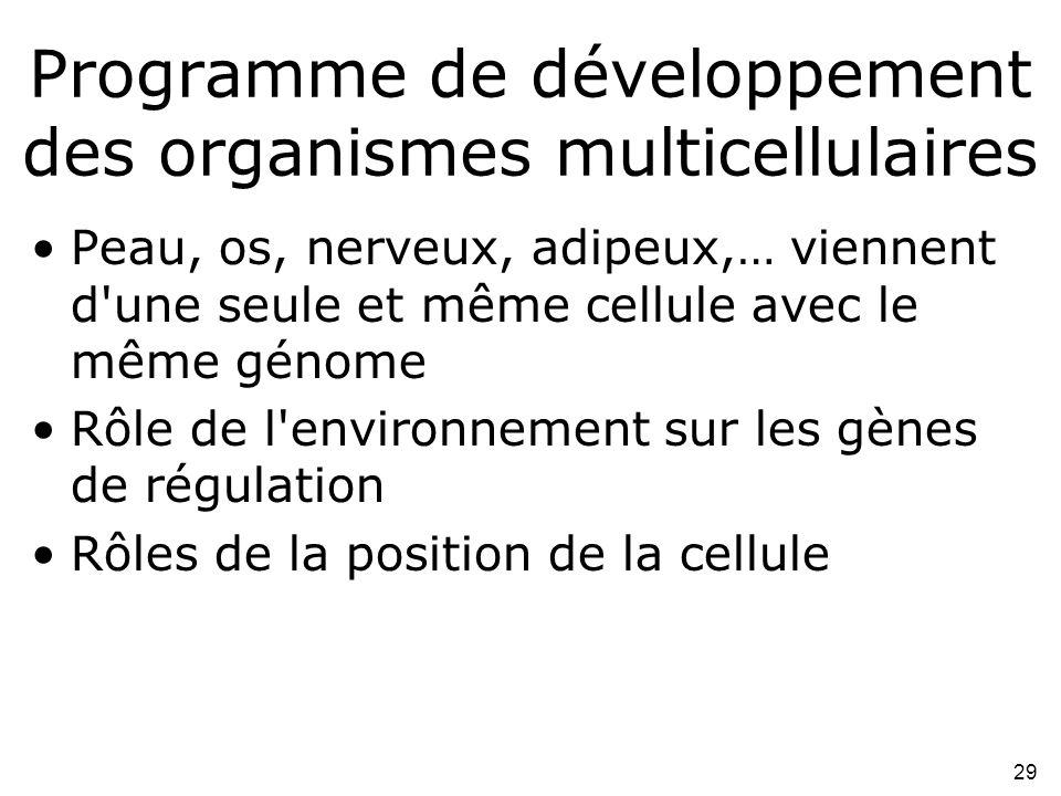 Programme de développement des organismes multicellulaires