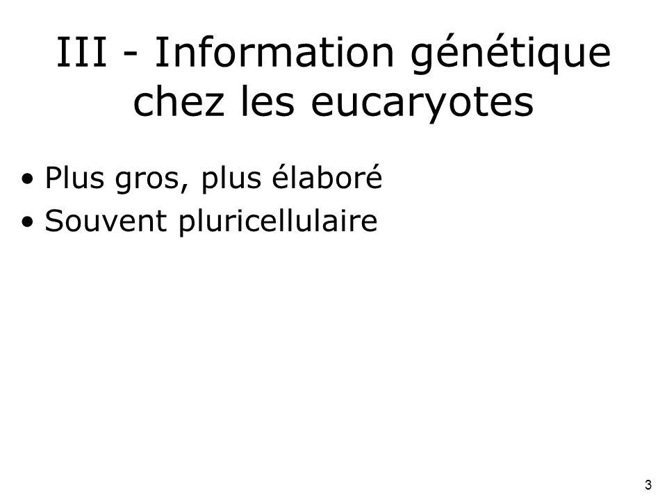 III - Information génétique chez les eucaryotes