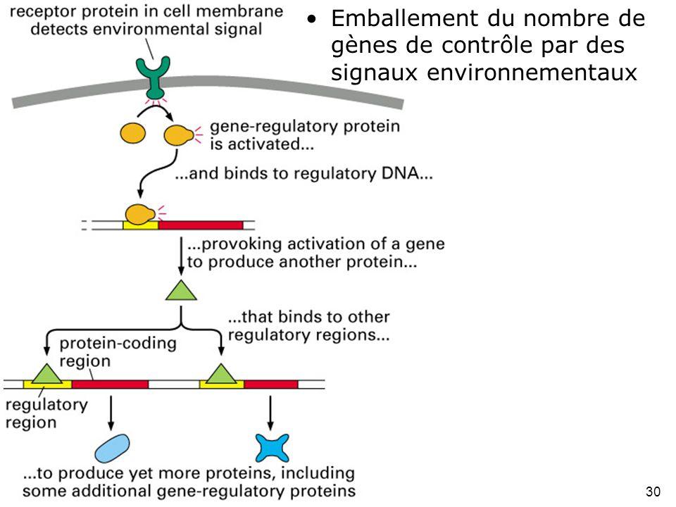 Emballement du nombre de gènes de contrôle par des signaux environnementaux