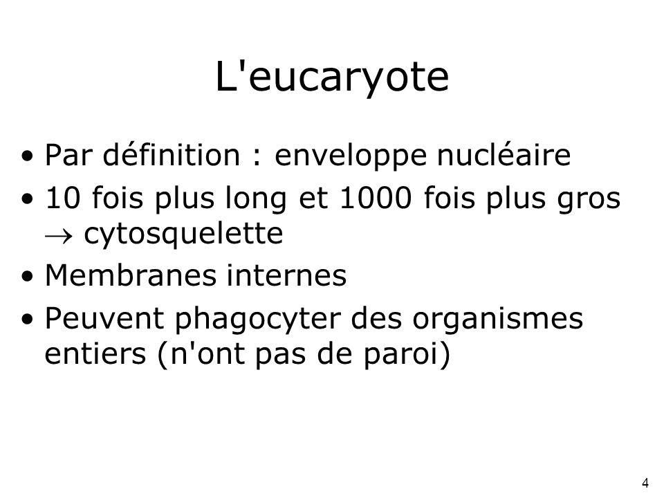 L eucaryote Par définition : enveloppe nucléaire