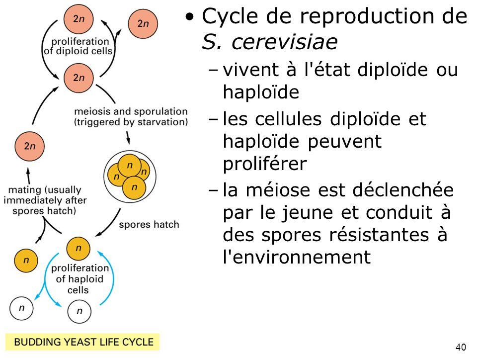 Fig 1-44 Cycle de reproduction de S. cerevisiae