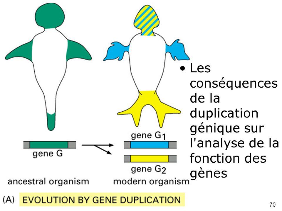 Les conséquences de la duplication génique sur l analyse de la fonction des gènes