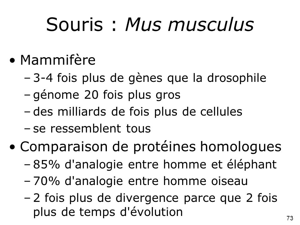 Souris : Mus musculus Mammifère Comparaison de protéines homologues
