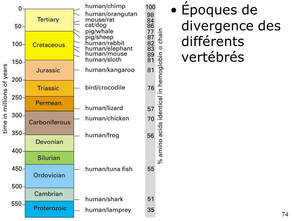 Époques de divergence des différents vertébrés