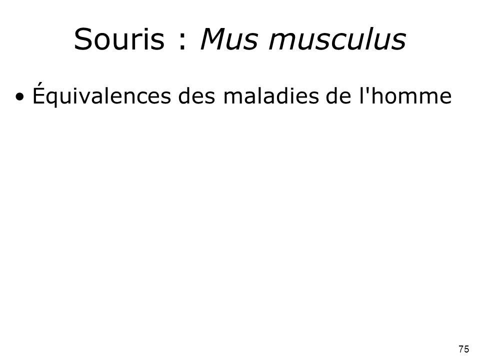 Souris : Mus musculus Équivalences des maladies de l homme