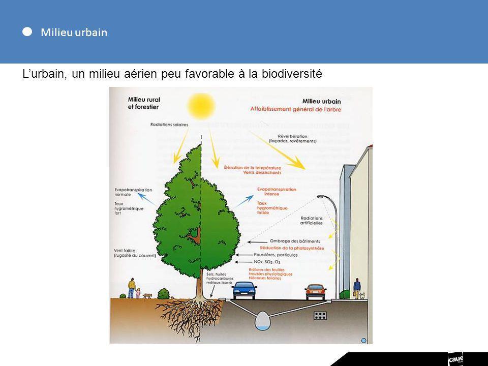Milieu urbain L'urbain, un milieu aérien peu favorable à la biodiversité
