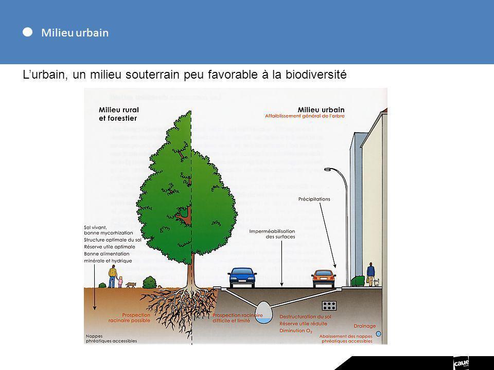 Milieu urbain L'urbain, un milieu souterrain peu favorable à la biodiversité