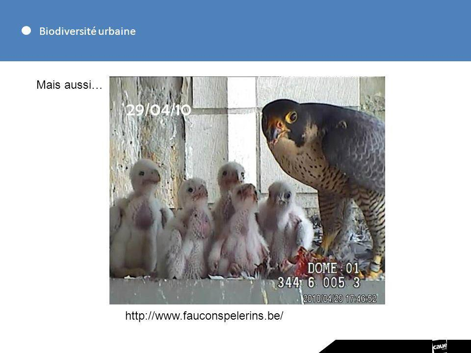 Biodiversité urbaine Mais aussi… http://www.fauconspelerins.be/