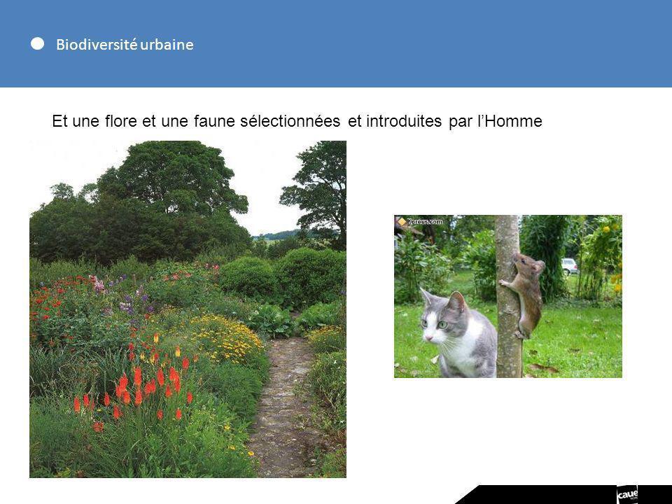 Biodiversité urbaine Et une flore et une faune sélectionnées et introduites par l'Homme