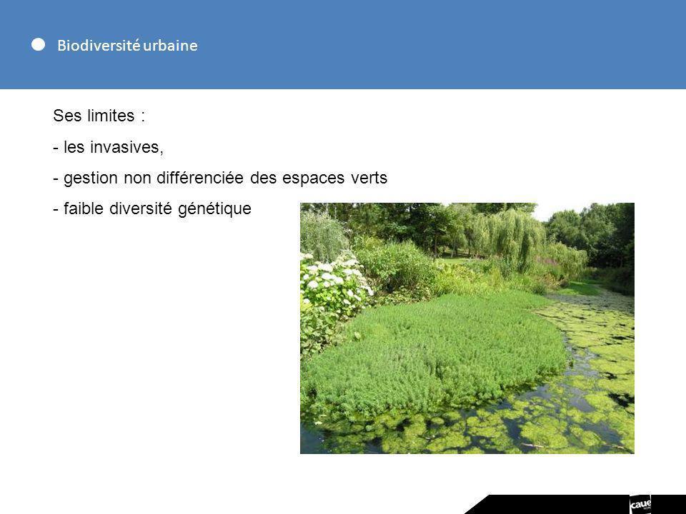 Biodiversité urbaine Ses limites : les invasives, gestion non différenciée des espaces verts.