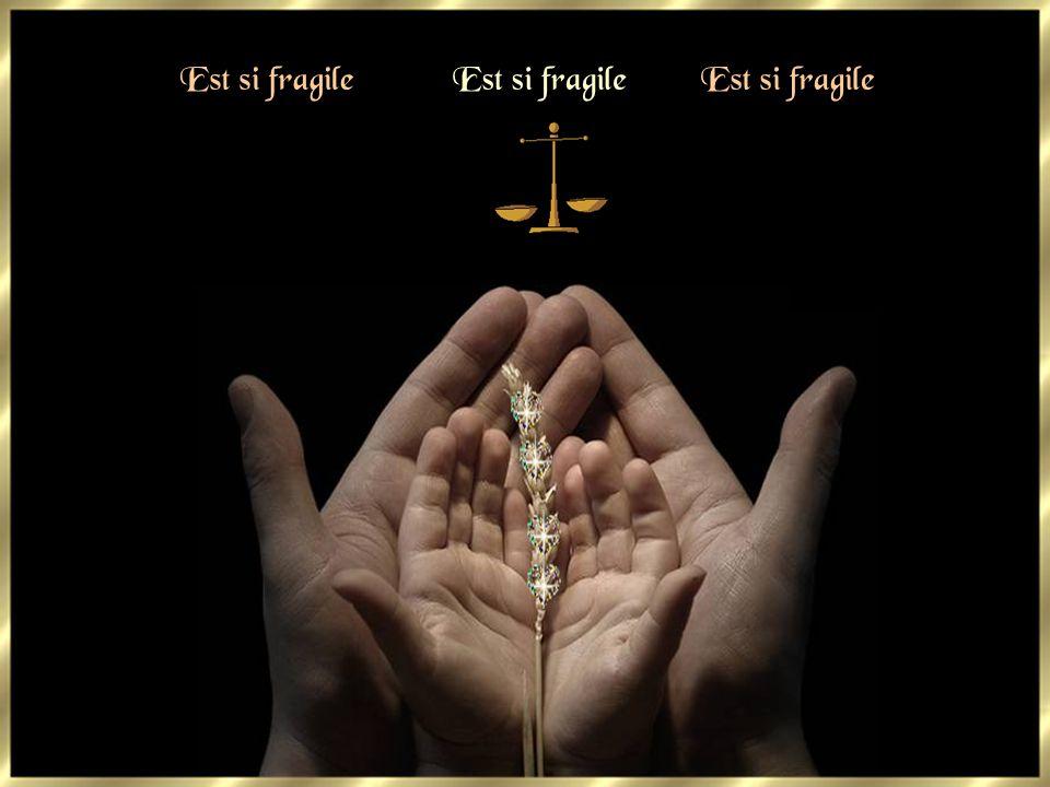 Est si fragile Est si fragile Est si fragile