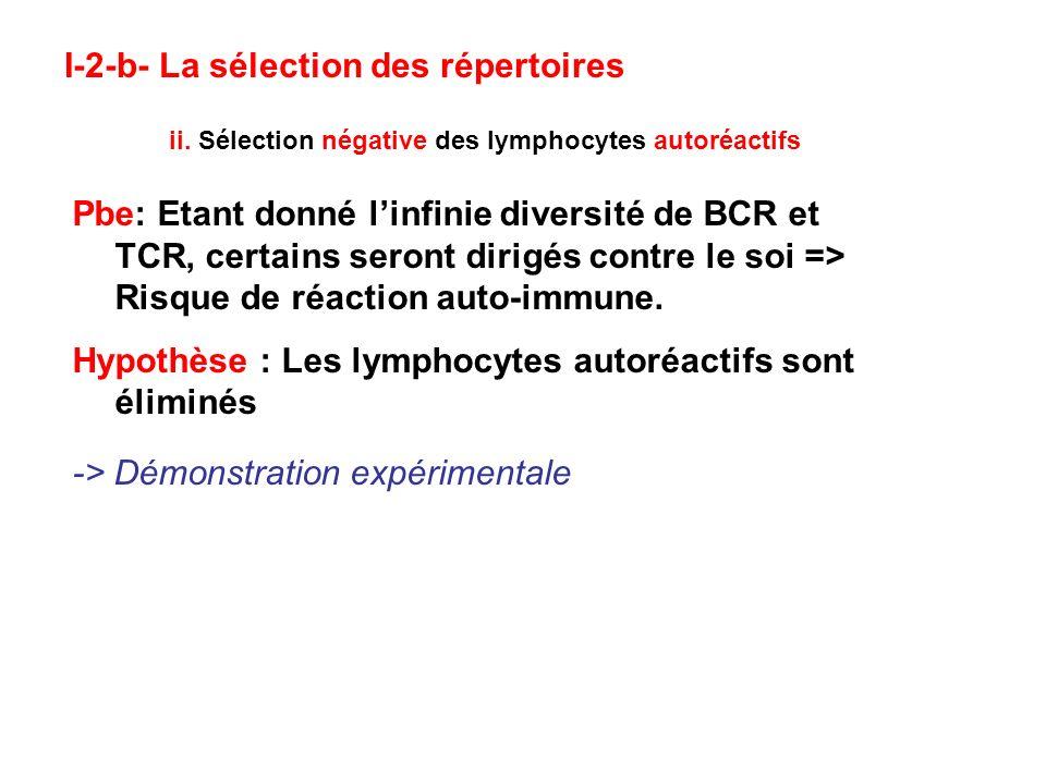 ii. Sélection négative des lymphocytes autoréactifs