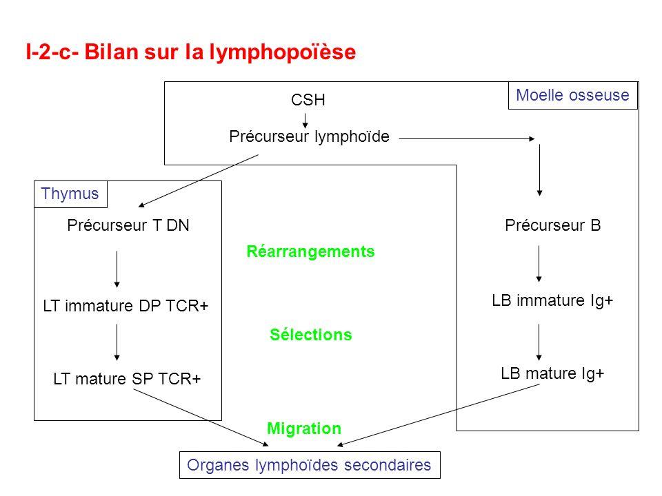 I-2-c- Bilan sur la lymphopoïèse
