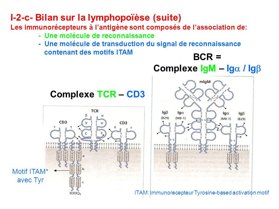 ITAM: Immunorecepteur Tyrosine-based activation motif