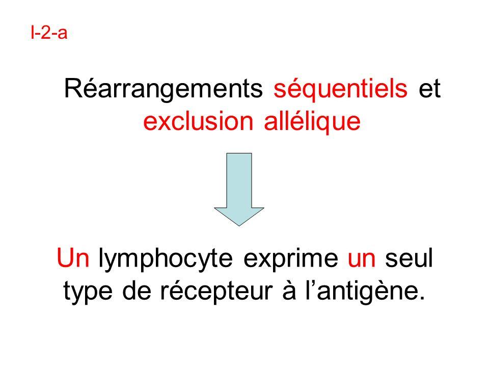 Un lymphocyte exprime un seul type de récepteur à l'antigène.