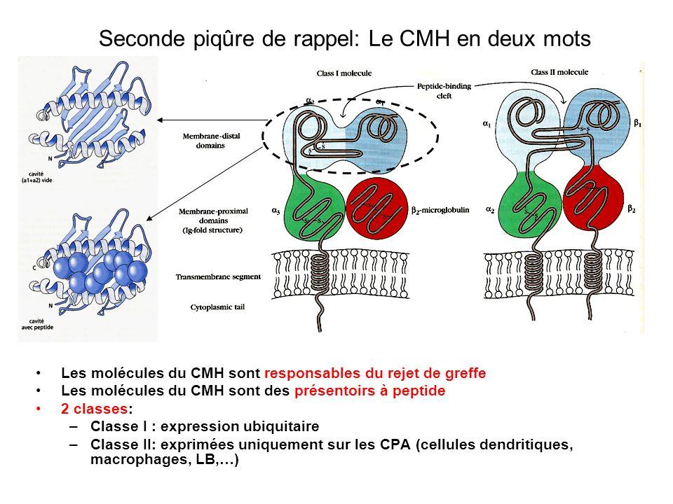 Seconde piqûre de rappel: Le CMH en deux mots