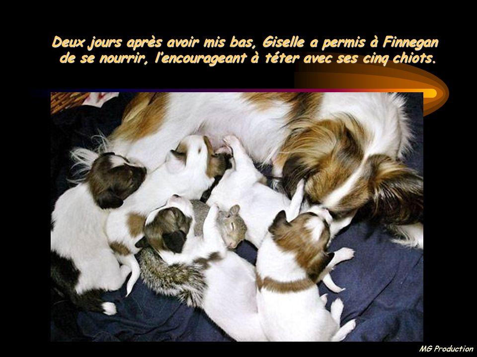 Deux jours après avoir mis bas, Giselle a permis à Finnegan de se nourrir, l'encourageant à téter avec ses cinq chiots.
