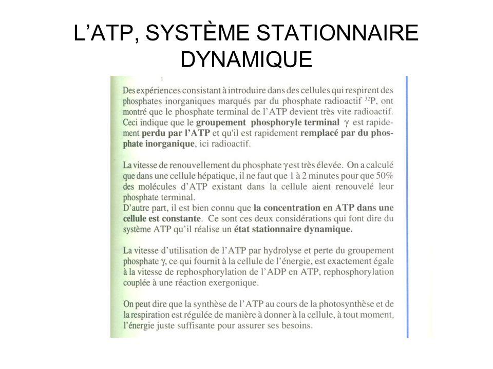 L'ATP, SYSTÈME STATIONNAIRE DYNAMIQUE