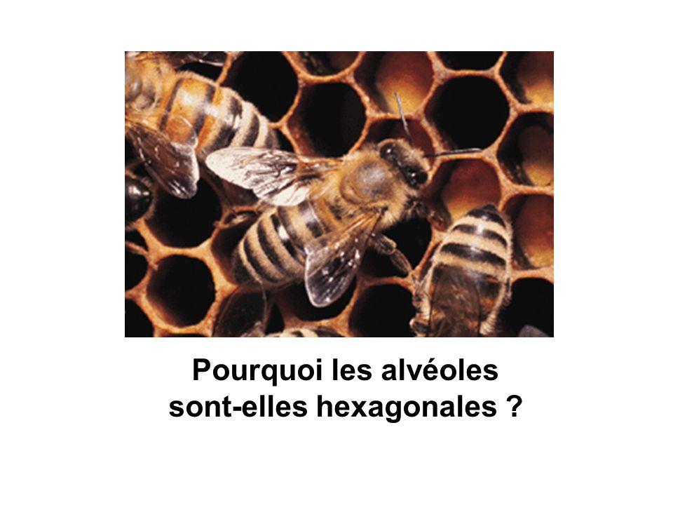 sont-elles hexagonales