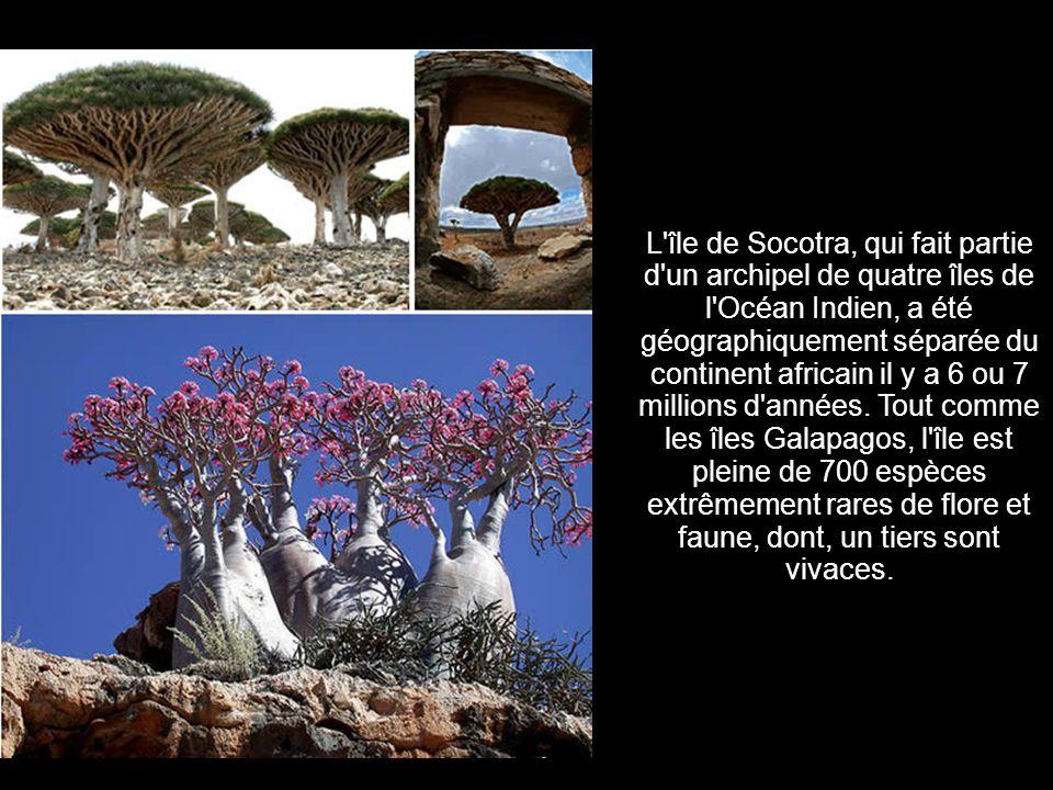 L île de Socotra, qui fait partie d un archipel de quatre îles de l Océan Indien, a été géographiquement séparée du continent africain il y a 6 ou 7 millions d années.