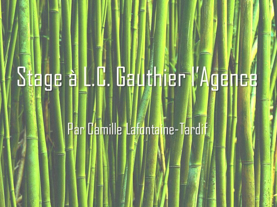 Stage à L.C. Gauthier l'Agence Par Camille Lafontaine-Tardif