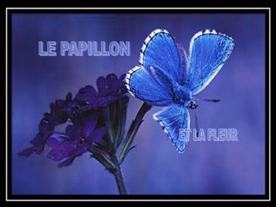 LE PAPILLON ET LA FLEUR