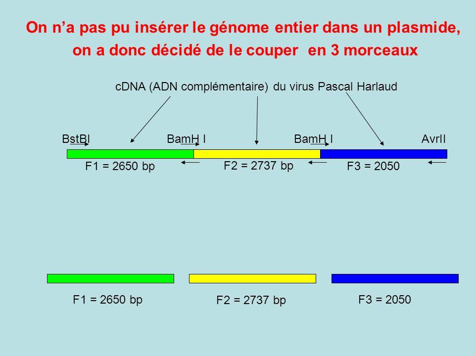 On n'a pas pu insérer le génome entier dans un plasmide,