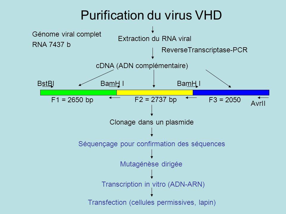 Extraction du RNA viral