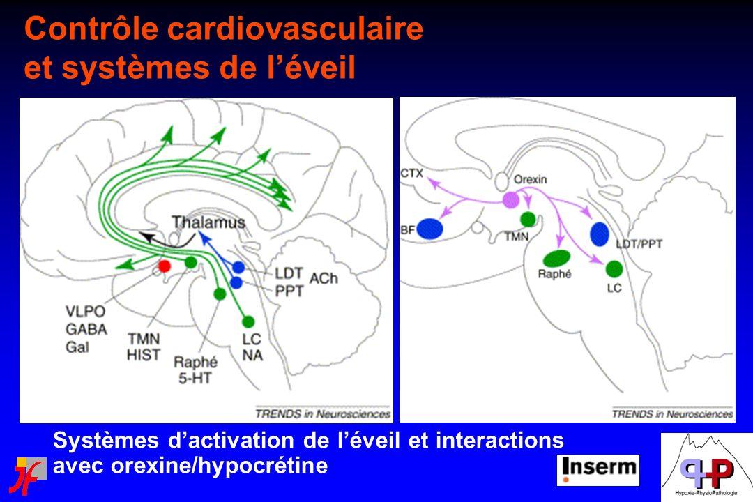 Contrôle cardiovasculaire et systèmes de l'éveil