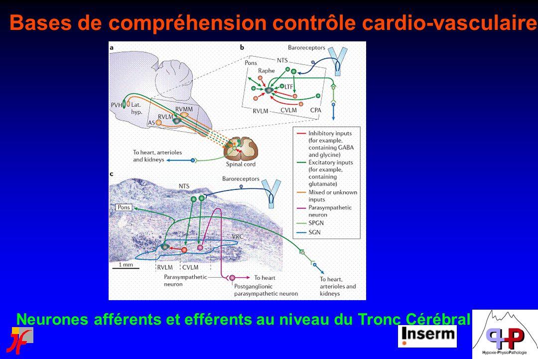 Bases de compréhension contrôle cardio-vasculaire