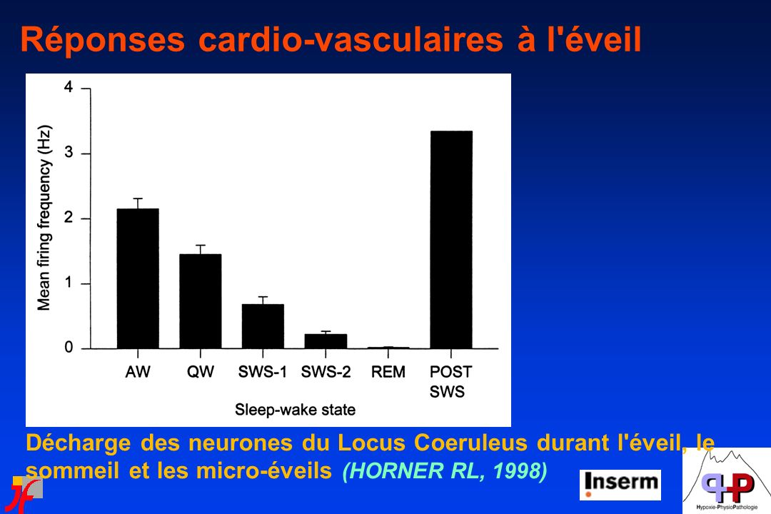 Réponses cardio-vasculaires à l éveil