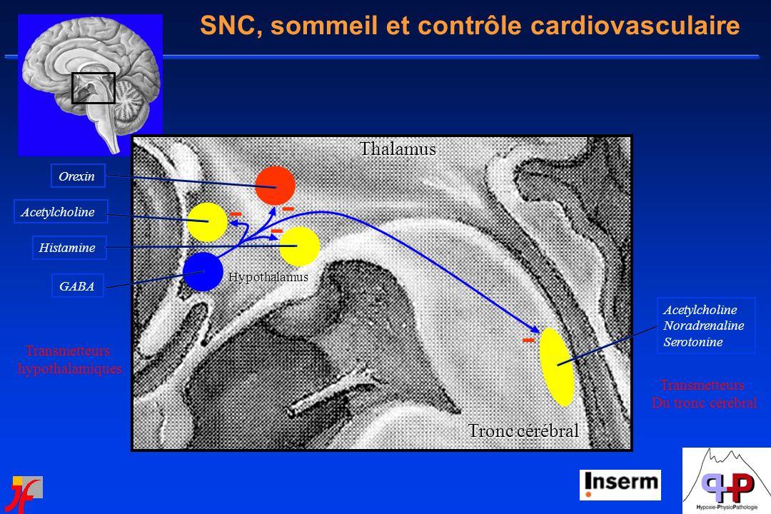 - - - - SNC, sommeil et contrôle cardiovasculaire Thalamus