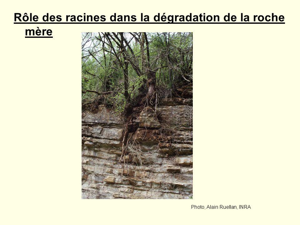 Rôle des racines dans la dégradation de la roche mère