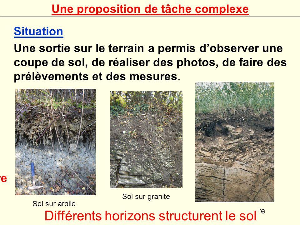 Différents horizons structurent le sol