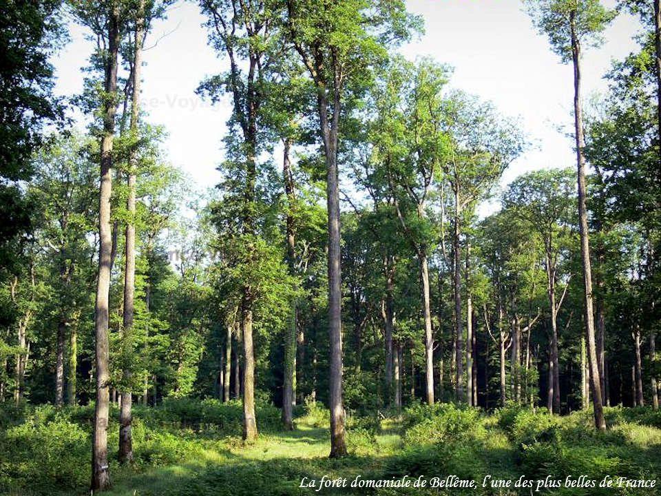 La forêt domaniale de Bellême, l'une des plus belles de France