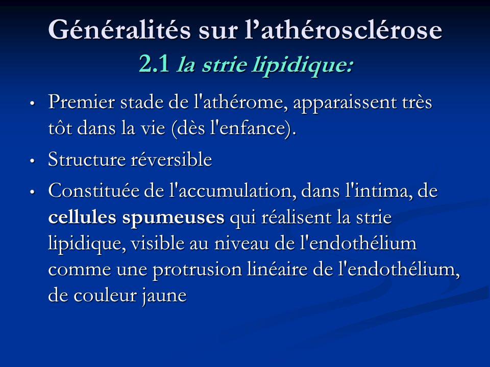 Généralités sur l'athérosclérose 2.1 la strie lipidique:
