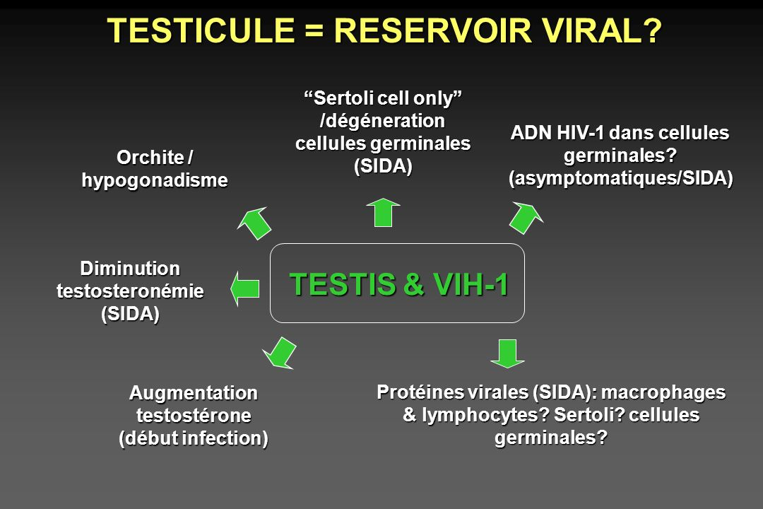TESTICULE = RESERVOIR VIRAL